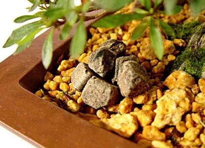 Fertilización de los bonsáis