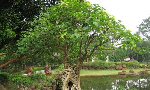 Imágenes de bonsáis