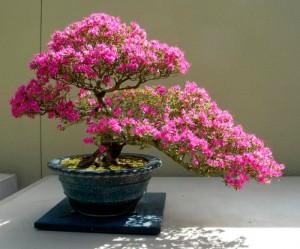Guía básica sobre los bonsáis