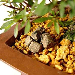 Fertilización del bonsái